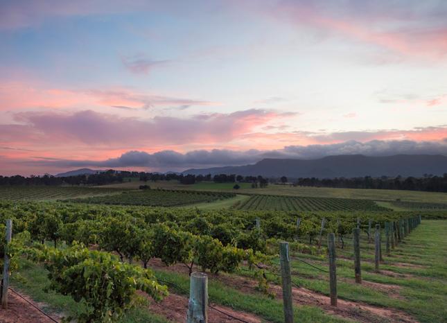 Bimbadgen Palmers Lane vineyard